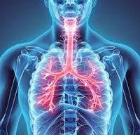 Aparello Respiratorio