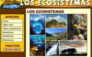 Os ecosistemas. Aprende e practica